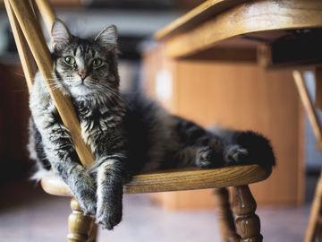 Katzenkrankheit Fip Auf Menschen übertragbar